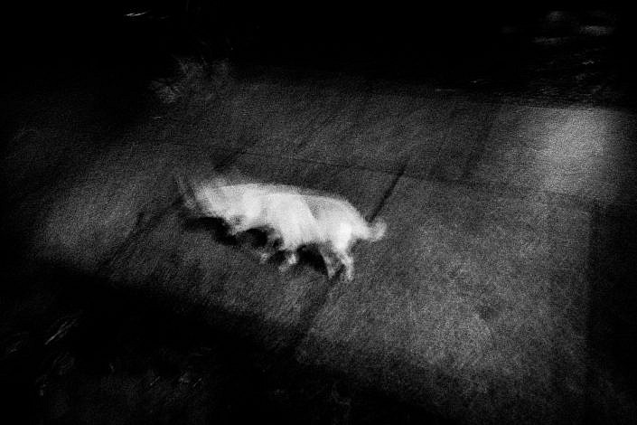 (Dog) Berlin 2015