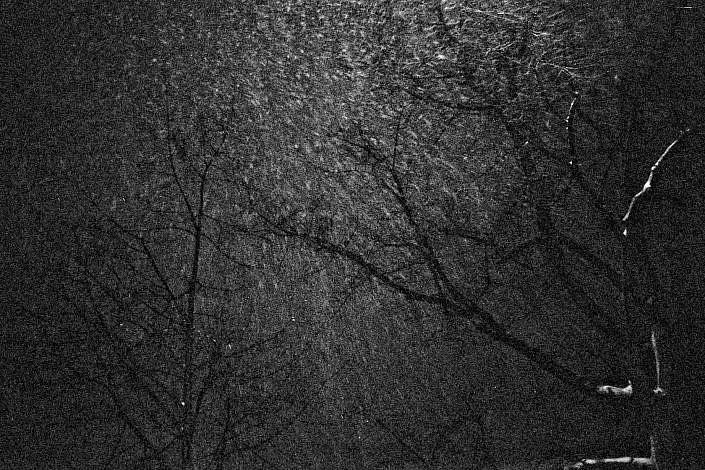 (Trees) Berlin 2013